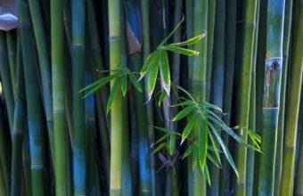 Bamboo Wallpaper 01 1920x1080 340x220