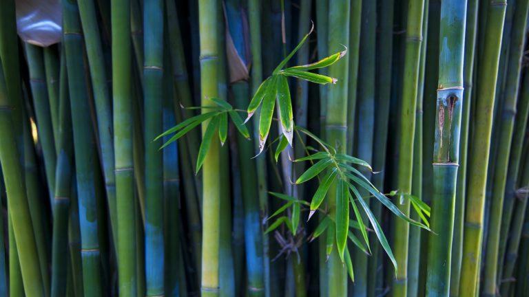 Bamboo Wallpaper 01 1920x1080 768x432