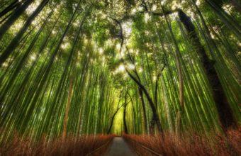 Bamboo Wallpaper 03 2560x1600 340x220
