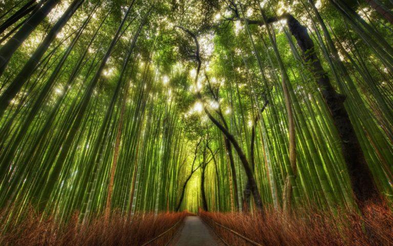 Bamboo Wallpaper 03 2560x1600 768x480