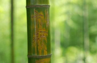 Bamboo Wallpaper 04 2560x1600 340x220