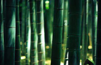 Bamboo Wallpaper 05 1920x1200 340x220