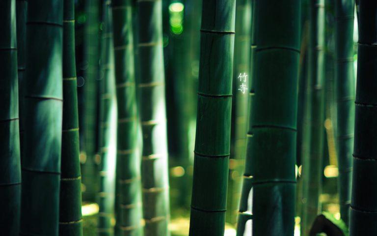 Bamboo Wallpaper 05 1920x1200 768x480