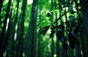 Bamboo Wallpaper 06 1920x1200 340x220