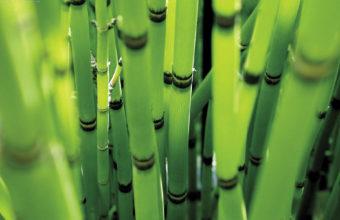 Bamboo Wallpaper 07 1920x1200 340x220