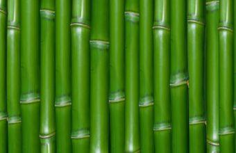 Bamboo Wallpaper 08 1920x1200 340x220