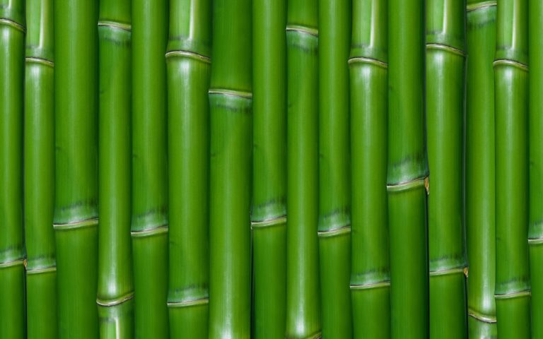 Bamboo Wallpaper 08 1920x1200 768x480