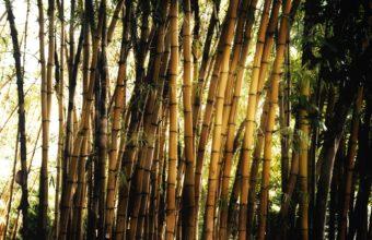 Bamboo Wallpaper 09 1920x1200 340x220