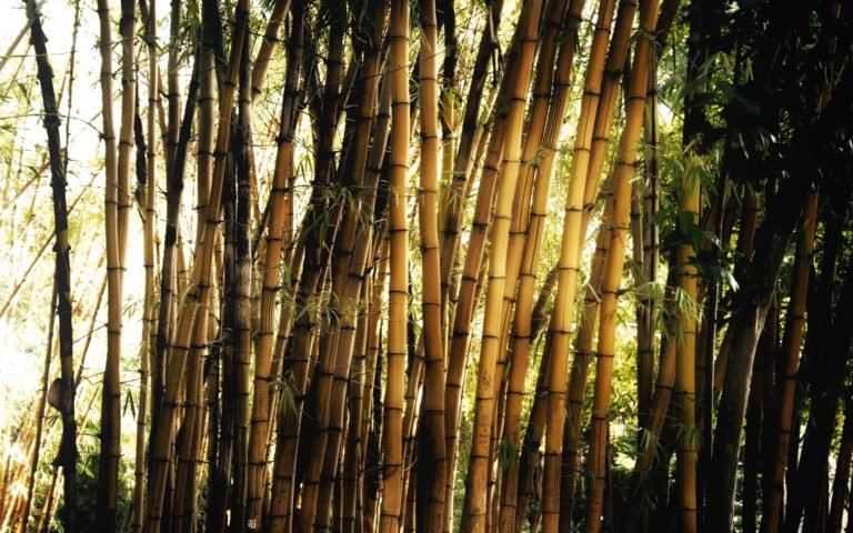 Bamboo Wallpaper 09 1920x1200 768x480