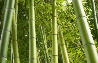 Bamboo Wallpaper 10 1920x1440 340x220