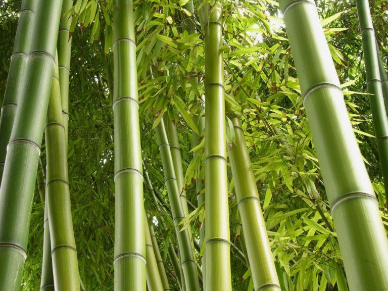 Bamboo Wallpaper 10 1920x1440 768x576