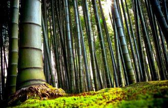 Bamboo Wallpaper 12 2960x1850 340x220