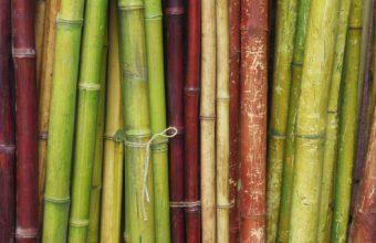 Bamboo Wallpaper 13 1920x1200 340x220