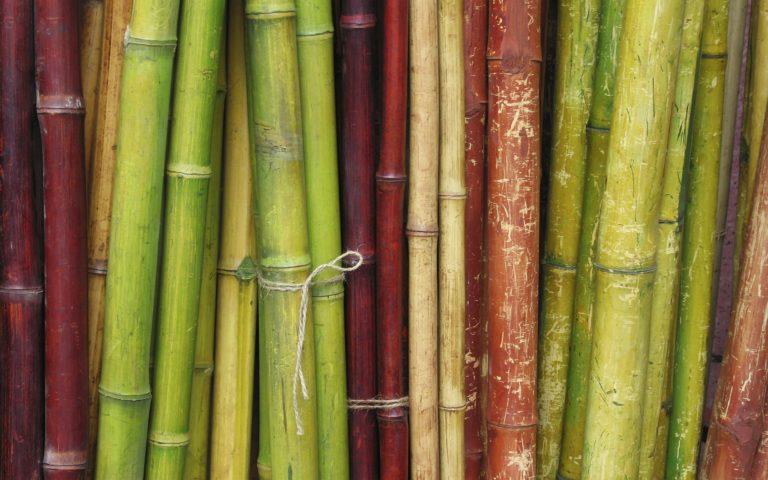 Bamboo Wallpaper 13 1920x1200 768x480