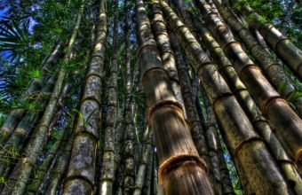 Bamboo Wallpaper 14 1920x1200 340x220