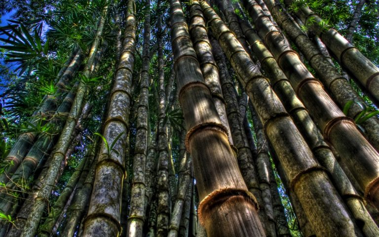 Bamboo Wallpaper 14 1920x1200 768x480