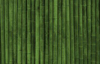 Bamboo Wallpaper 16 1920x1080 340x220