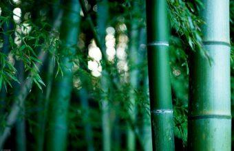 Bamboo Wallpaper 18 1920x1200 340x220