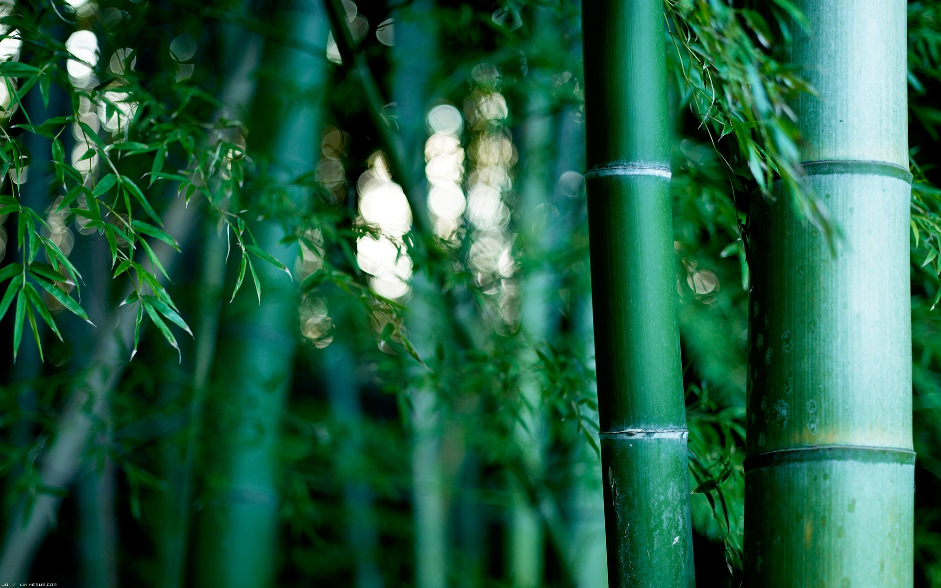 Bamboo Wallpaper 18 1920x1200