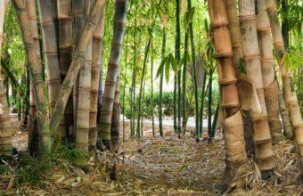 Bamboo Wallpaper 19 1920x1080 340x220