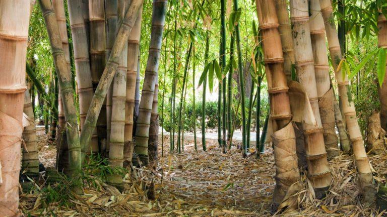 Bamboo Wallpaper 19 1920x1080 768x432