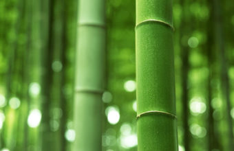 Bamboo Wallpaper 21 1920x1200 340x220