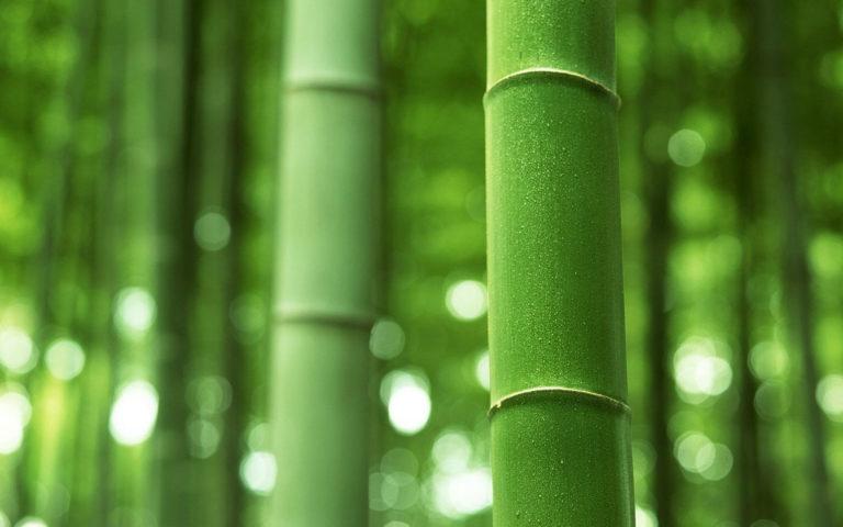 Bamboo Wallpaper 21 1920x1200 768x480