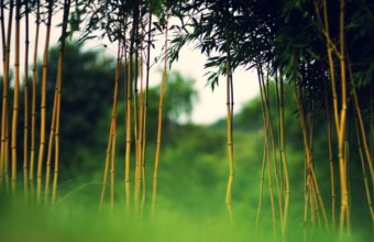 Bamboo Wallpaper 22 1920x1080 340x220