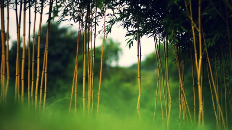 Bamboo Wallpaper 22 1920x1080 768x432