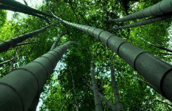 Bamboo Wallpaper 23 1920x1080 340x220