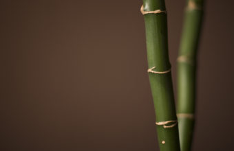 Bamboo Wallpaper 24 1920x1200 340x220