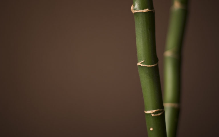 Bamboo Wallpaper 24 1920x1200 768x480