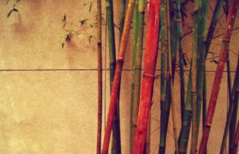 Bamboo Wallpaper 25 1920x1200 340x220