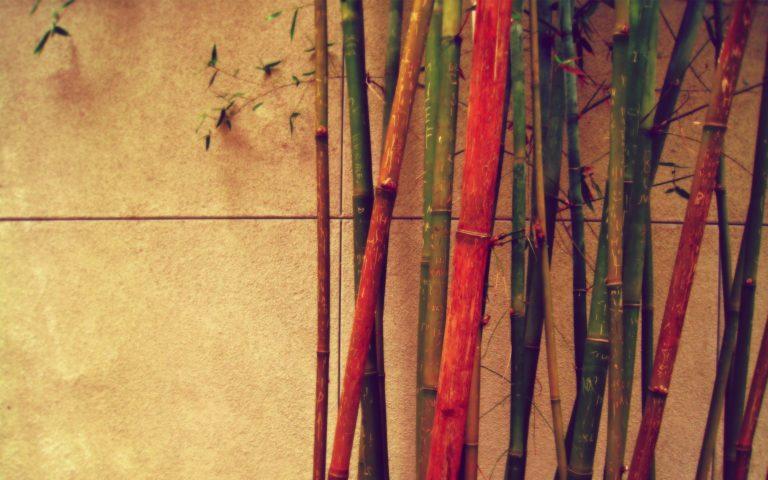 Bamboo Wallpaper 25 1920x1200 768x480