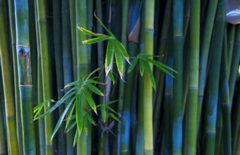 Bamboo Wallpaper 27 1920x1080 340x220