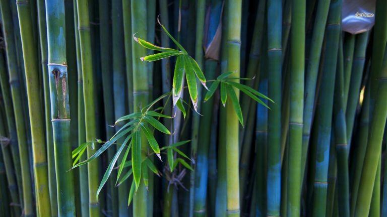Bamboo Wallpaper 27 1920x1080 768x432