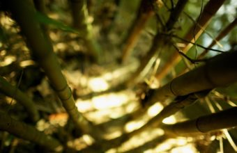 Bamboo Wallpaper 28 2560x1440 340x220