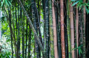 Bamboo Wallpaper 30 4912x2760 340x220