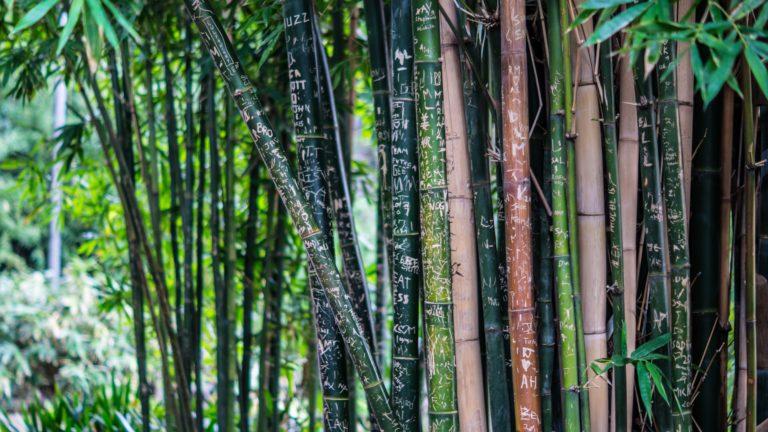 Bamboo Wallpaper 30 4912x2760 768x432