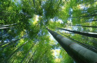 Bamboo Wallpaper 32 3000x2000 340x220
