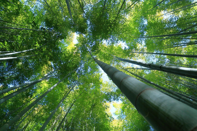 Bamboo Wallpaper 32 - [3000x2000]