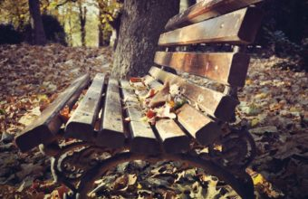 Bench Background 07 1920x1200 340x220