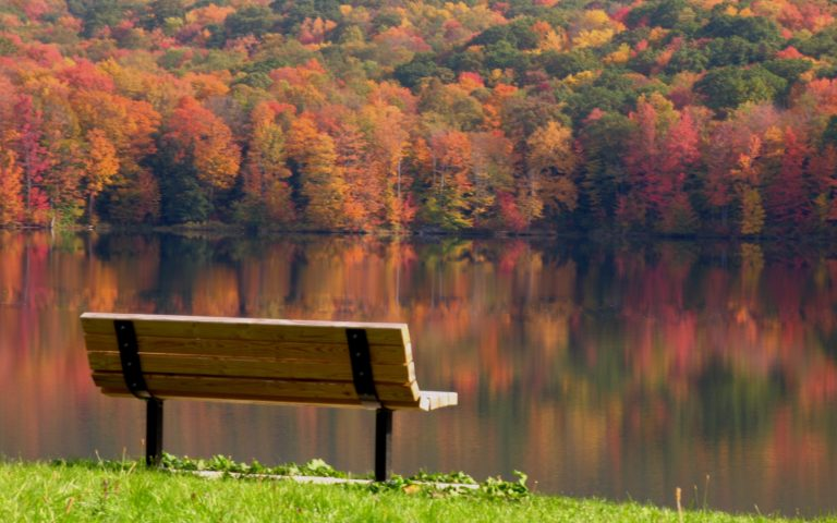 Bench Background 14 2560x1600 768x480