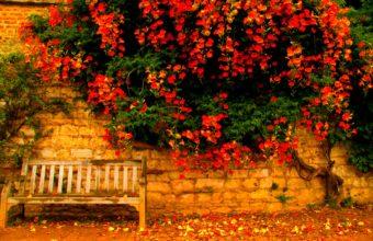 Bench Background 46 1680x1050 340x220