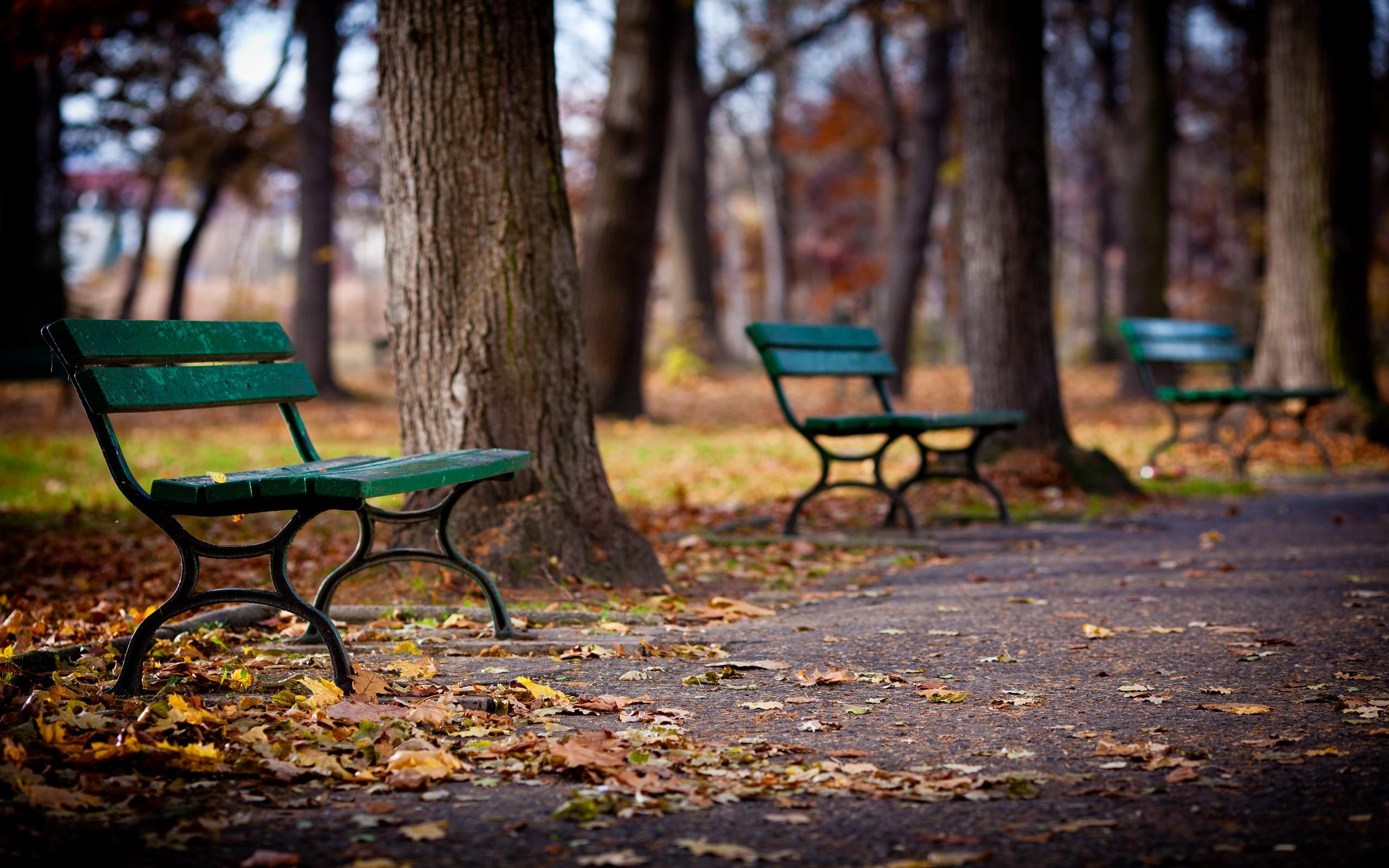 осень листья лавочка парк бесплатно