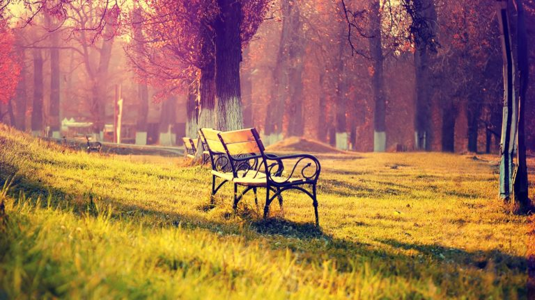 Bench Wallpaper 34 1600x900 768x432