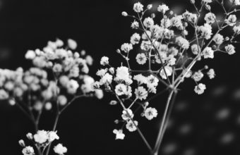 Black and White Background 45 2496x1664 340x220