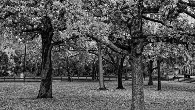 Black and White Wallpaper 06 1920x1080 768x432