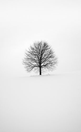 Black and White Wallpaper 3264x4896 14 340x550