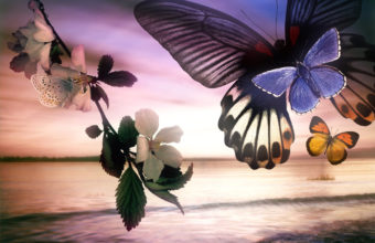 Butterfly Wallpapers 01 1280 x 960 340x220